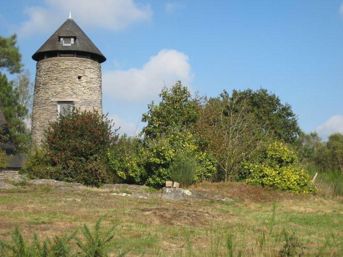 Le Moulin de Cojoux et la végétation fleurie (Photo : JCArquié)